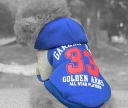 Chaqueta de perro con capucha Talla L – Ropa mascotas